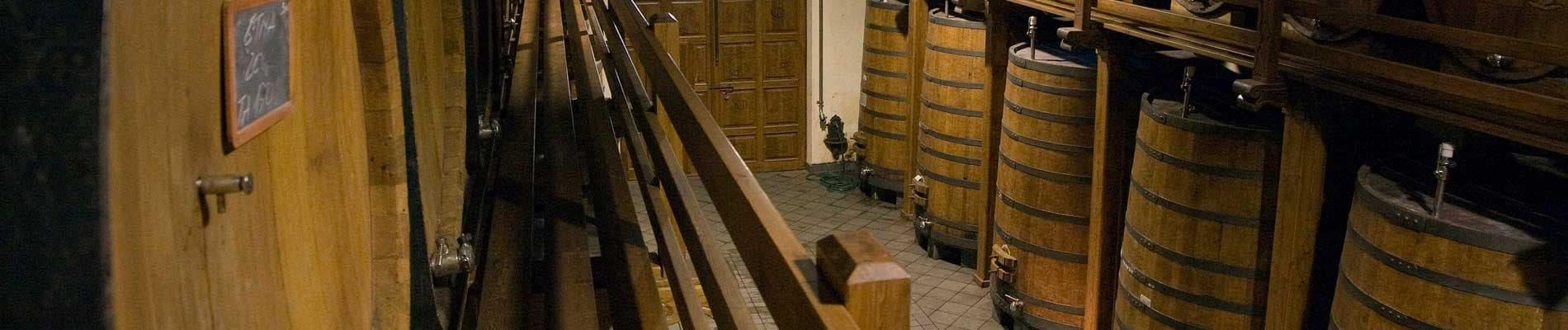 Enologia e viticoltura
