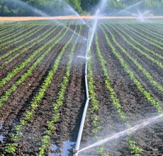 Agricultura, jardinería y mineralogía