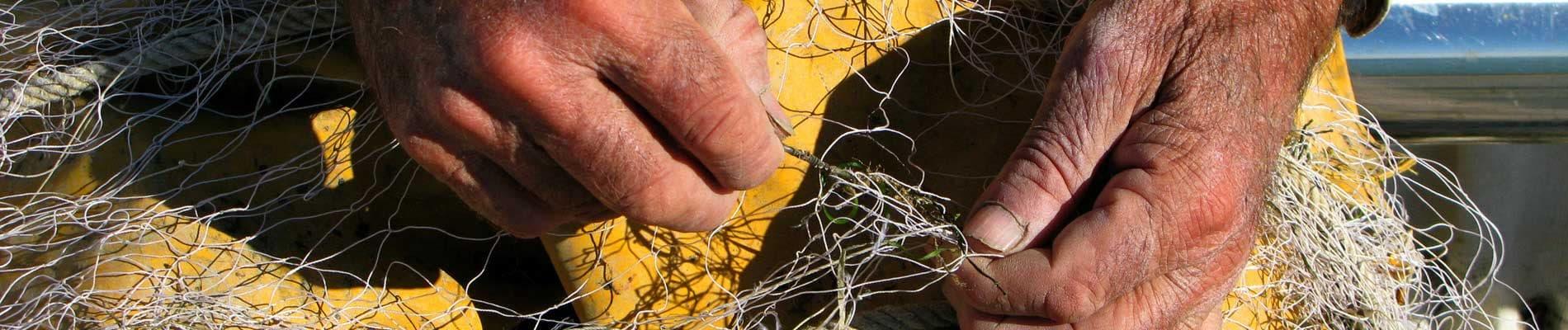 Actividades marítimo-pesqueras