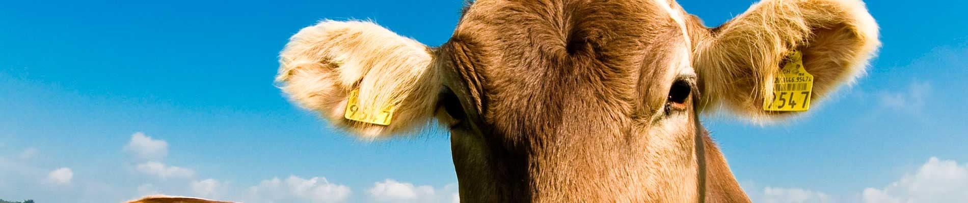 Fattorie e industrie agricole e zootecniche