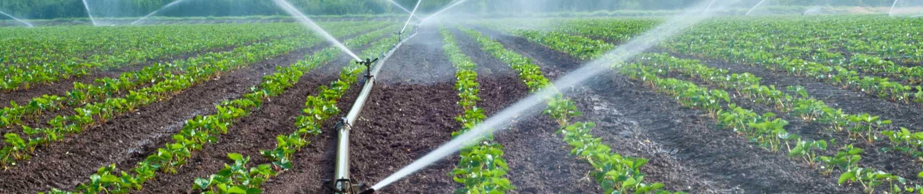 Agricultura, jardineria i mineralogia